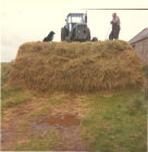 Silage making.